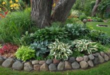 How to Do Landscaping Around Trees With Rocks? 12 Interesting Ideas For Landscaping Around Trees With Rocks: